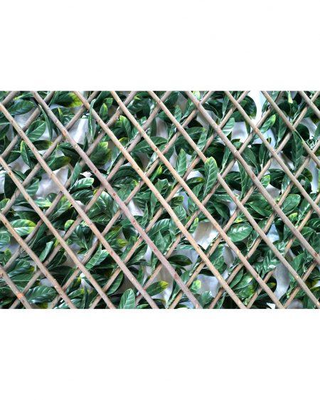 Urban 10 Laurel Expanding Hedge Rear