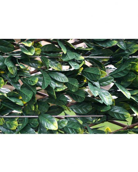Urban 10 Laurel Expanding Hedge Close Up