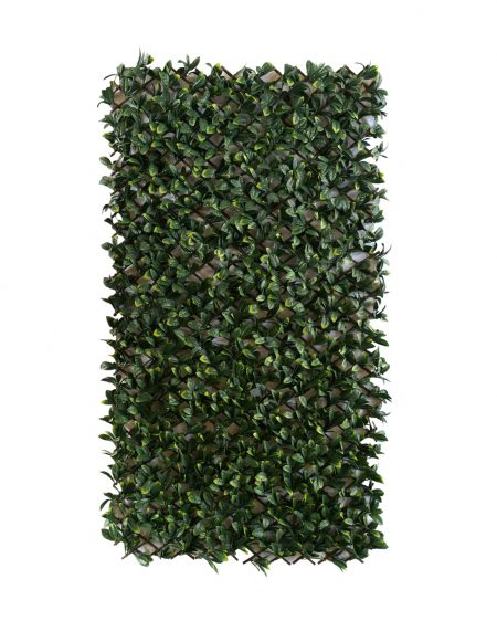 Urban 10 Laurel Expanding Hedge