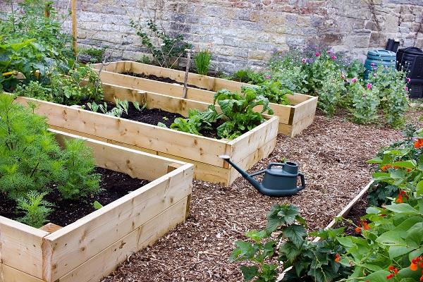 Raised garden beds with veg